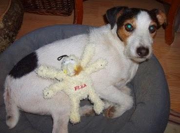 les piqûres de puces sur les chiens