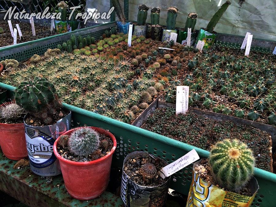 Multiplicación de Cactus