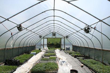 Western Belize Happenings 10 000 Greenhouses Bring