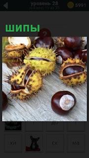 На столе лежат плоды каштана с шипами в виде колючек и отдельно без кожуры
