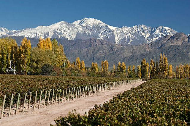 Bạn đã bao giờ thử thưởng thức thương hiệu rượu vang đỏ Chile G7? Nếu chưa thì hãy đến với vùng sản xuất rượu Concha y Toro và tận hưởng chúng. Với khung cảnh đẹp như tranh vẽ, du khách Santiago đừng quên đẩy hết lồng ngực hít lấy một hơi căng tràn hương thơm của nho trên giàn leo và hướng tầm mắt ra khắp Thung lũng Maipo.