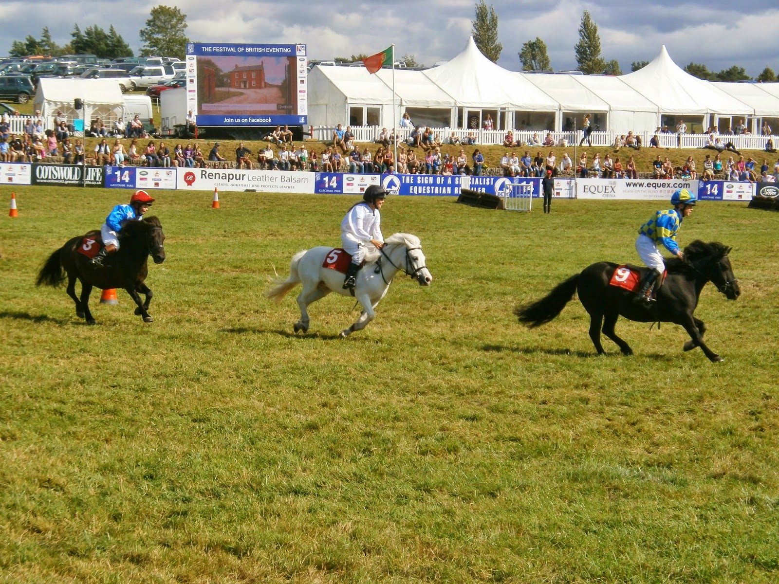Shetland ponies racing at Gatcombe Festival of Eventing