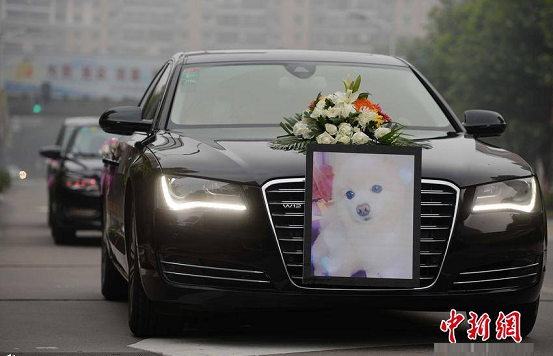 dog burial billionaire shanghai