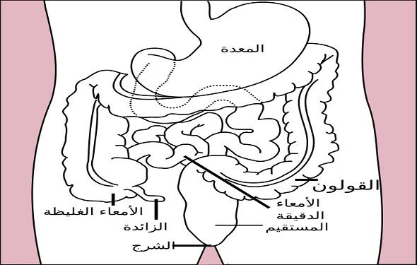 digestive-system-definition-تعريف-الجهاز-الهضمي