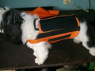 imobilizador de cães