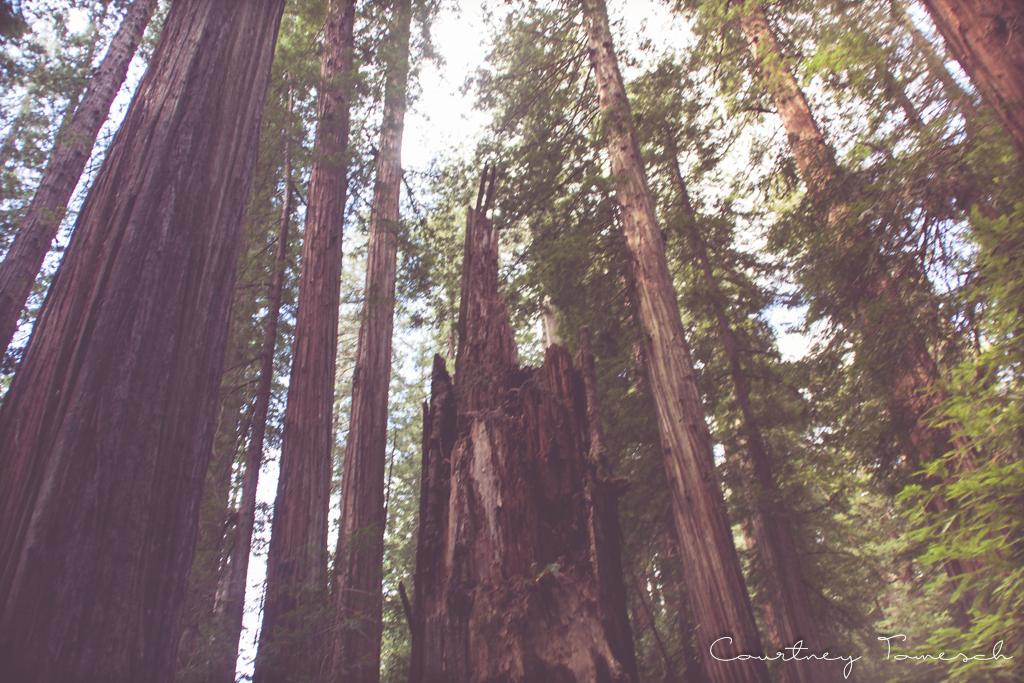 Courtney Tomesch Redwood Redcrest California