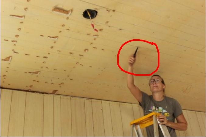 Madu menetes dari atap, keluarga ini temukan hal yang mencengangkan