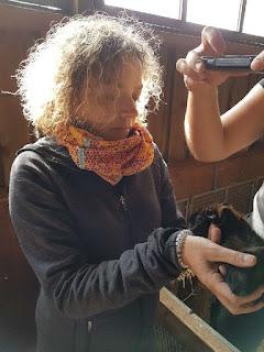Meerschweinchen verstehen: Meerschweinchen Hope - Merkmalsbestimmung
