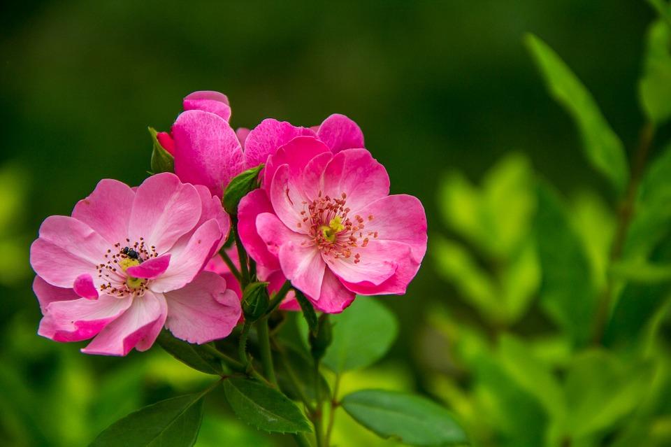 kumpulan kosakata nama bunga dalam bahasa inggris dan artinya