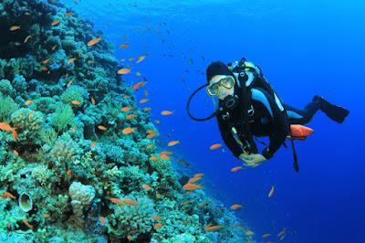 foto diving di kepulauan seribu