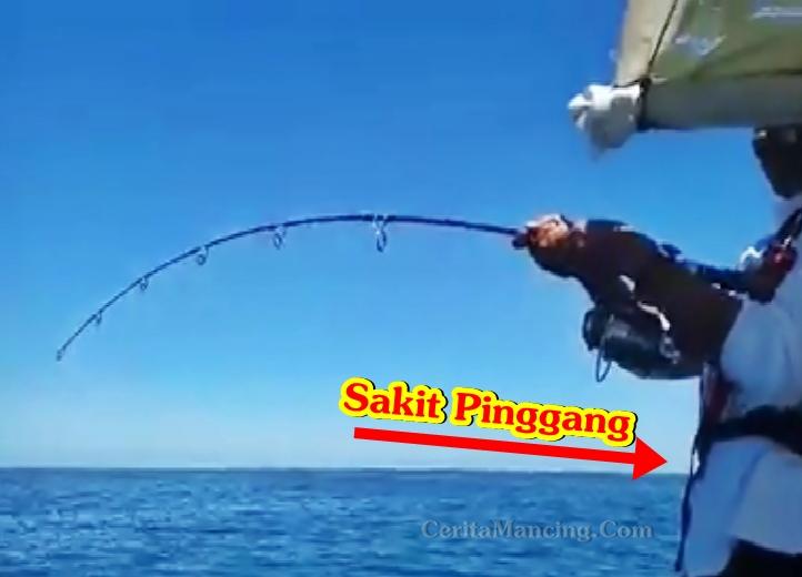 Mancing Ikan Cermin Monster Pemancingnya Sampai Sakit Pinggang