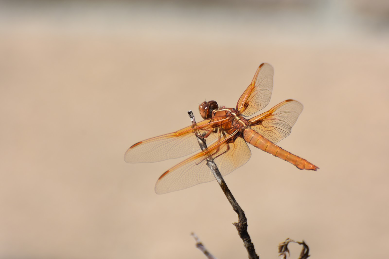 mother nature u0027s backyard a water wise garden flame skimmer
