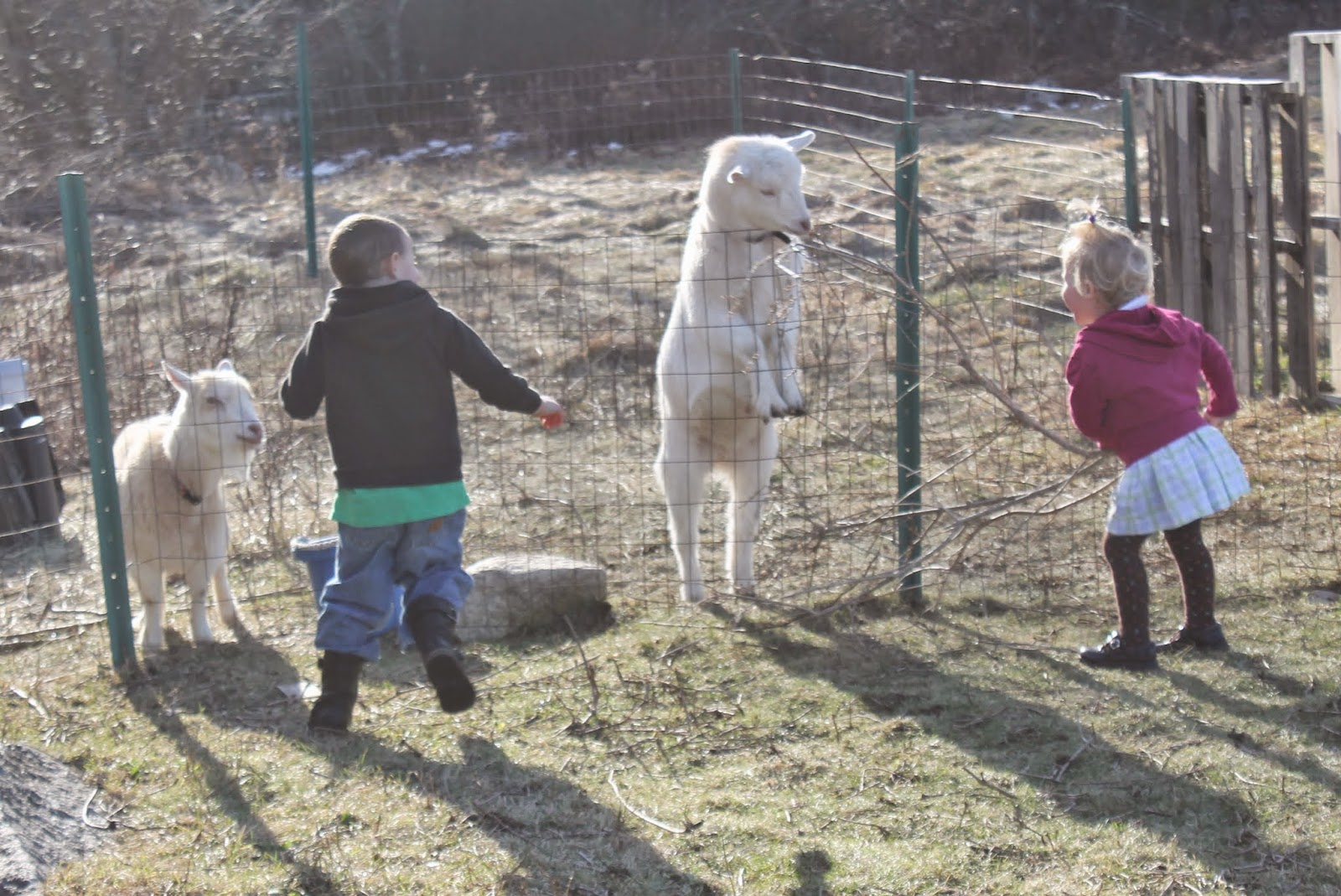 Born Imaginative Warm Weather And Animals