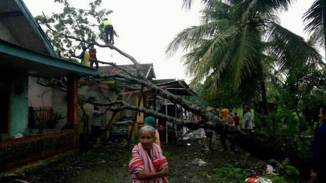 Dua rumah di gempal tertimpa pohon pete akiban angin puting beliung