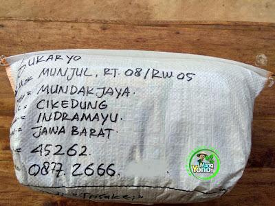 Benih pesana    SUKARYO Indramayu, Jabar.   (Sesudah Packing)