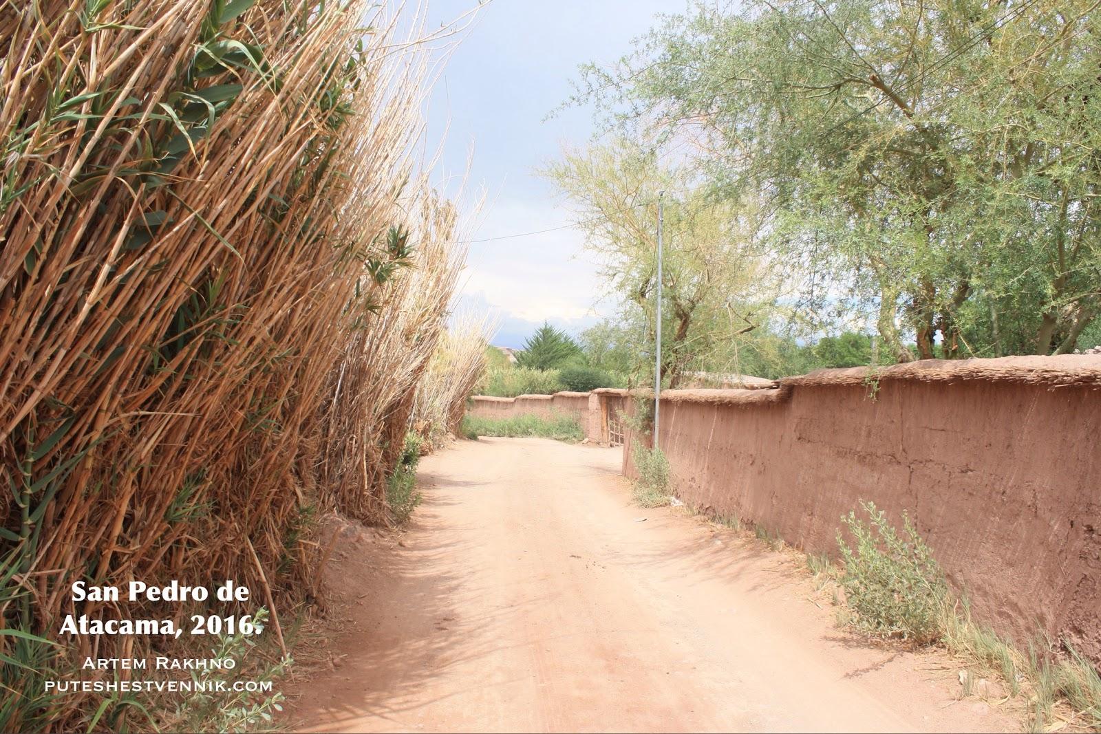 Тростник в Сан-Педро-де-Атакама
