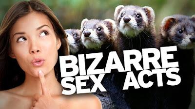 Bizarre Sex Acts