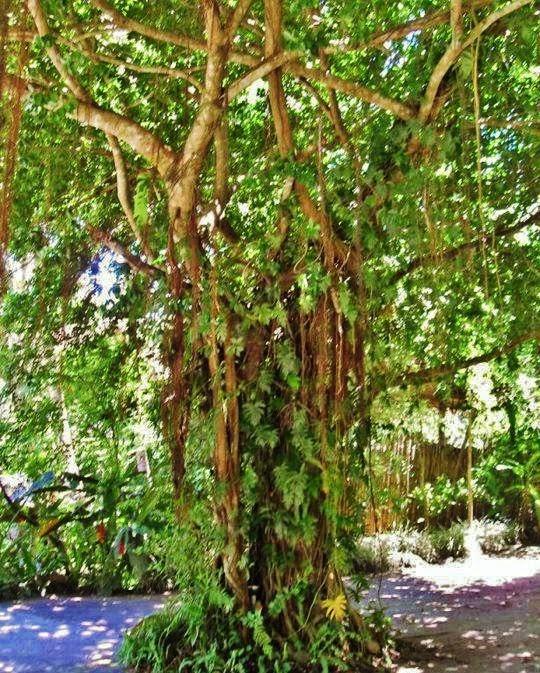 mystical-tree