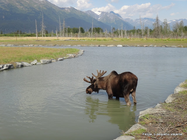 alaska_wildlife_conservation_center