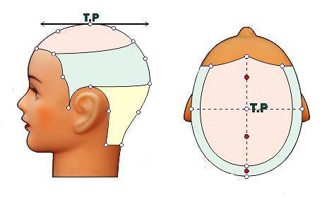 Các điểm trên đầu – học cắt tóc cơ bản