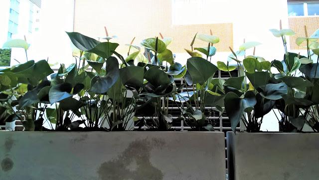 jardim japonês, plantas para jardim japonês, paisagismo atelier hideko honma, como esconder ar-condicionado