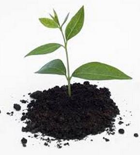 manfaat sampah organik sebagai kompos