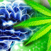 Harvard Study: Smoking Weed Improves Brain Functions