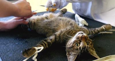 What is Cat Neutering