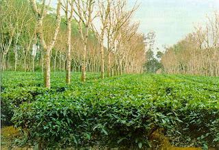 How to Apply for Agroforestry Workshop in Kenya