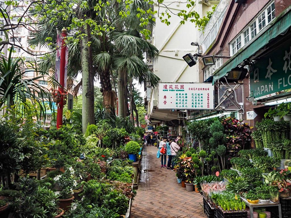 Flower Market, Mong Kok