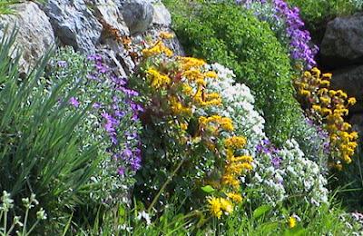 plantas cobertoras típicas de rocalla