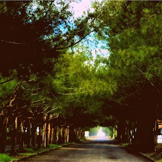 Alameda Verde, em Balneário Gaivotas