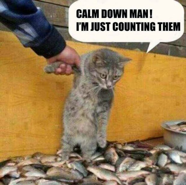 funny%2Bcat%2527s%2Bpictures.jpg