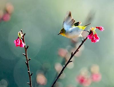 صورة أحد العصافير الجميلة وصغير حلوه كتير خلفية لوحة فنية جميلة جدأ تعبر عن جمال عالم الطيور