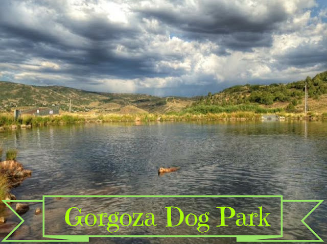 Gorgoza Dog Park, Kimball Junction, Utah, Hiking in Utah with Dogs