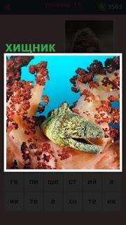 651 слов хищная рыба под водой из своей норы вылезла 19 уровень
