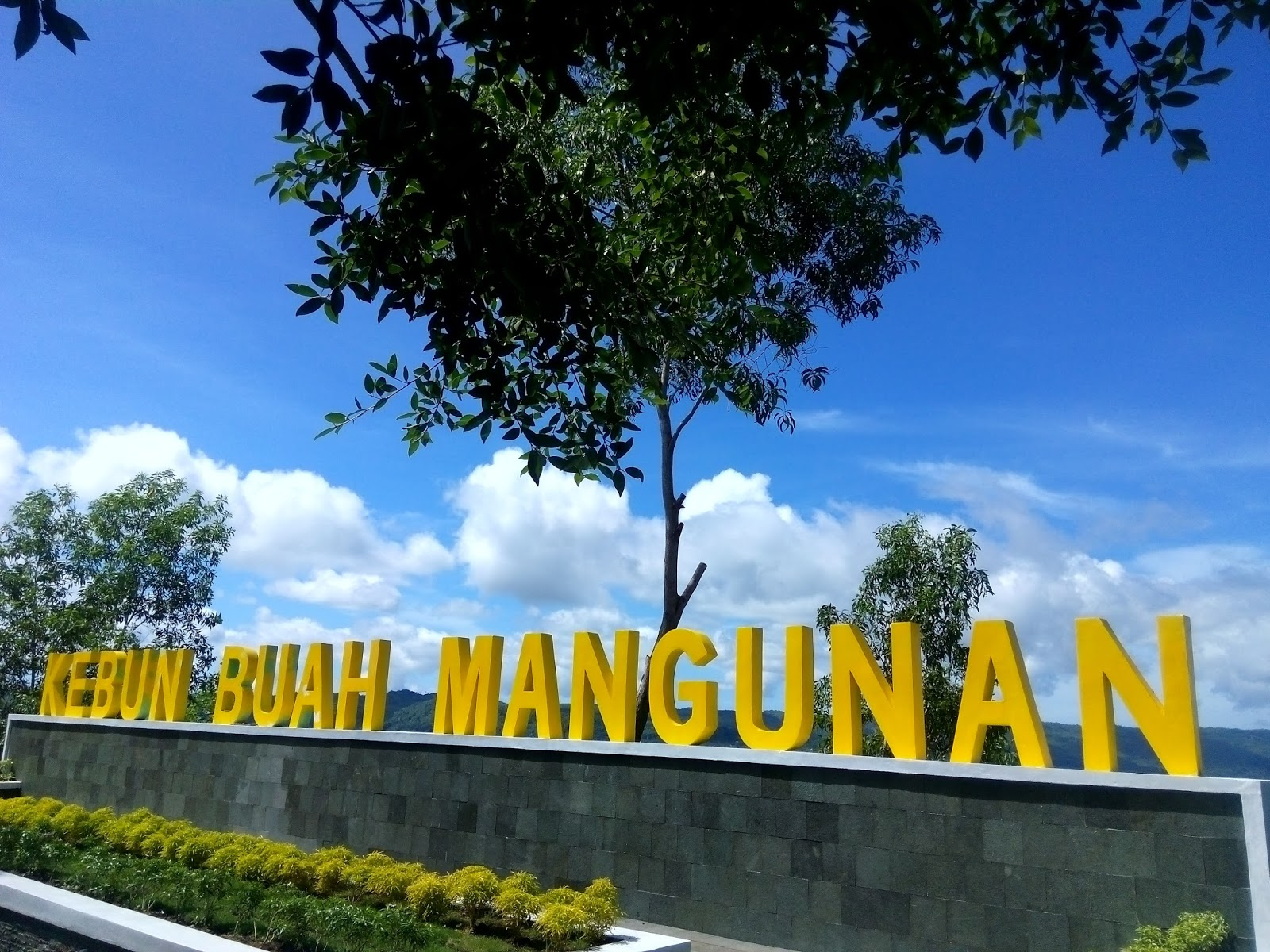 pesona keindahan kebun buah mangunan yogyakarta