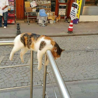 Cats sleep anywhere
