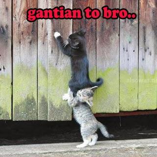 DP BBM kucing lucu
