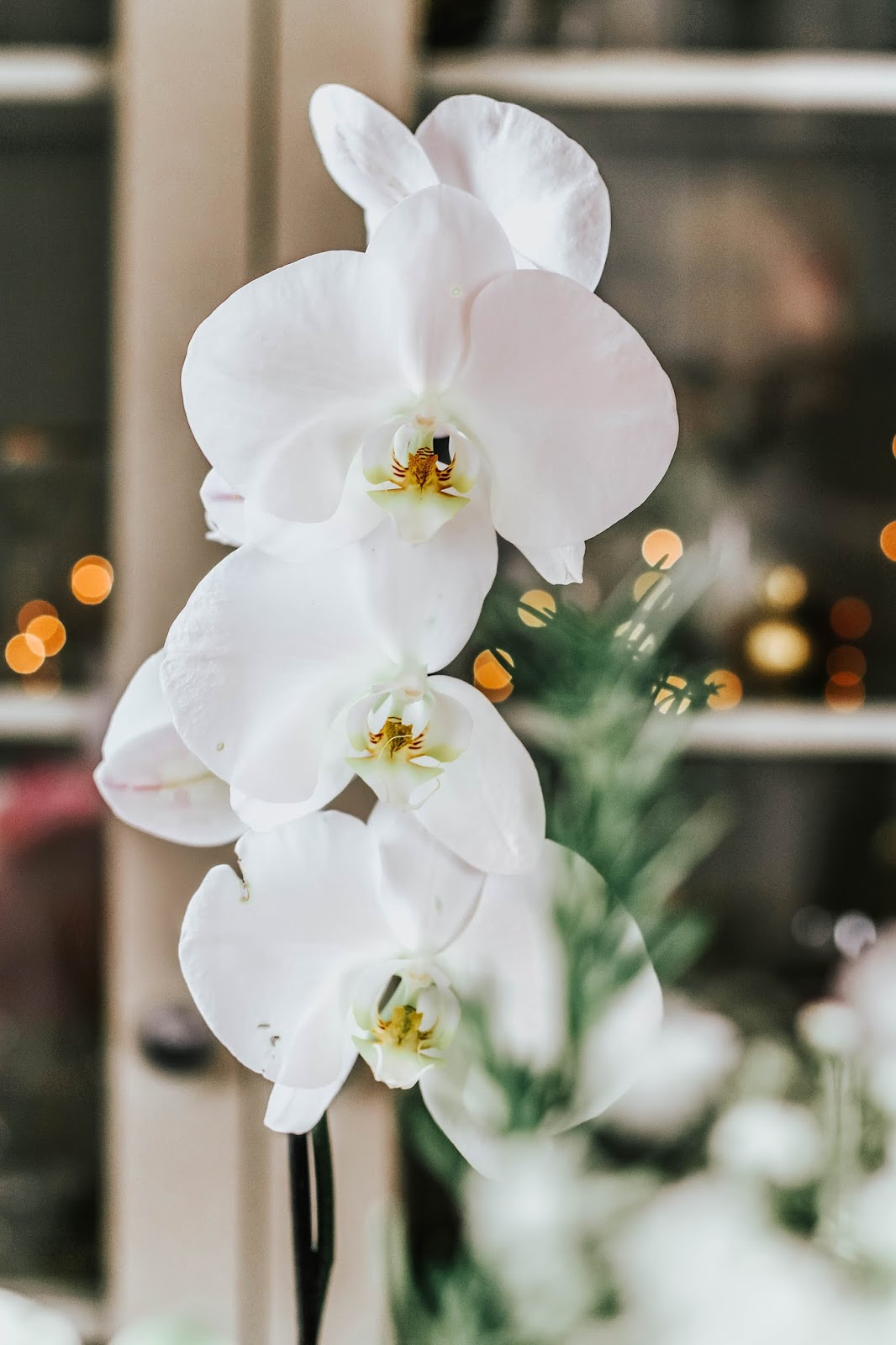 M&S White Orchid