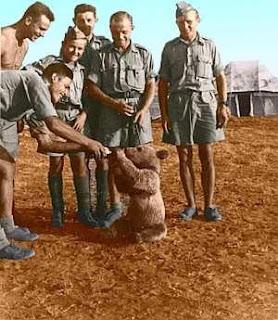 WW2 Polish Soldiers -  2nd Polish Corps and Mascot - Wojtek the cub bear
