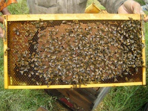 Δημιουργία νέων μελισσιών χωρίς την μετακίνηση της παραφυάδας