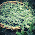 Descoberta planta que tem o poder de erradicar 98% das células cancerígenas em menos de 24 horas!