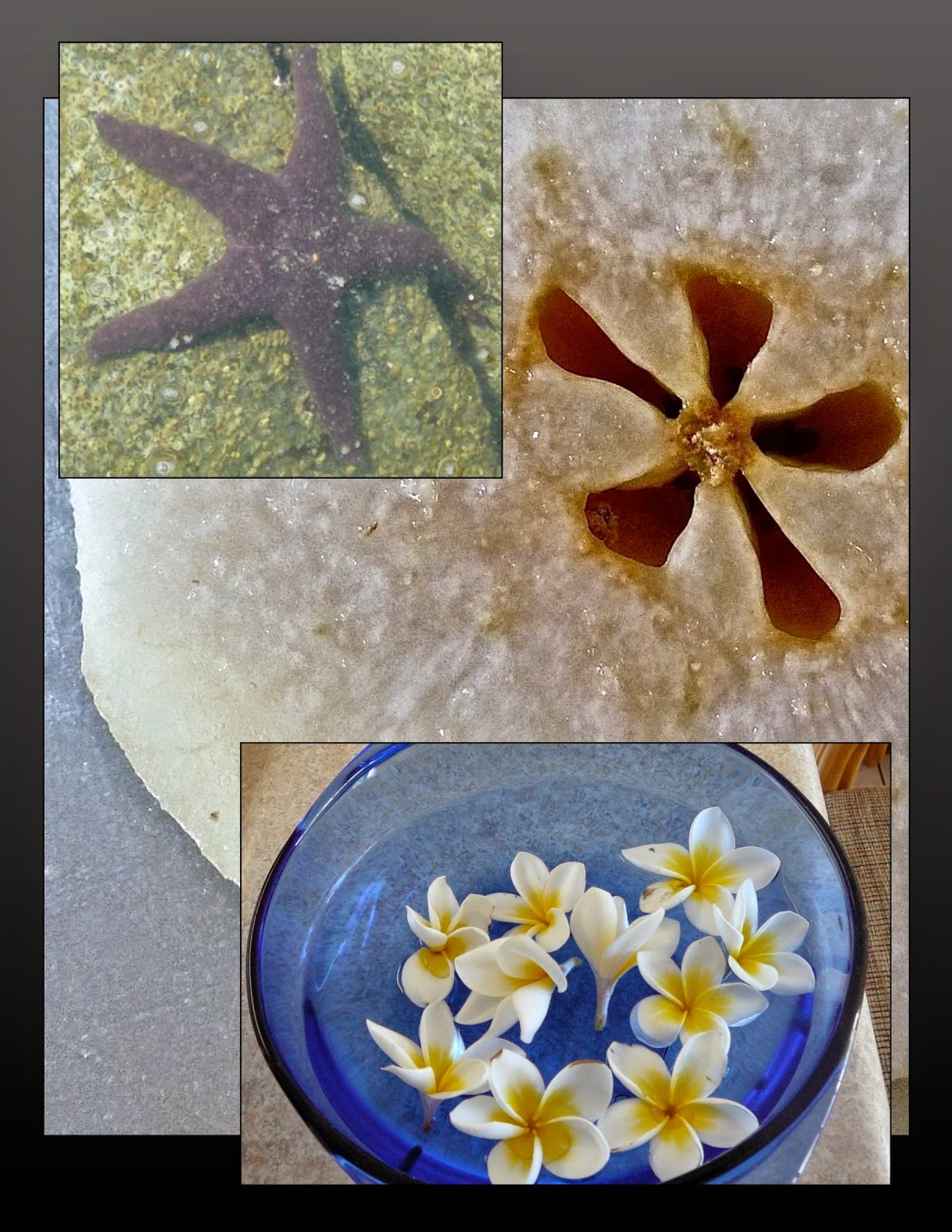 Fives in starfish, fruit core, flowers