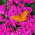 Campos do Jordão - Borboletário Flores que voam