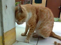 5 Cara Untuk Melatih Kucing Agar Nurut/Patuh, Cerdas/Pintar, Jinak