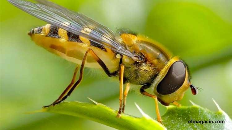 Historia de una abeja. El Magacín.