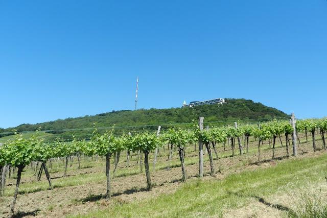 Widok na wzgórze Kahlenberg w Wiedniu