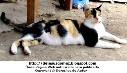 Foto de una gata descansando. Foto de gata tomada por Jesus Gómez