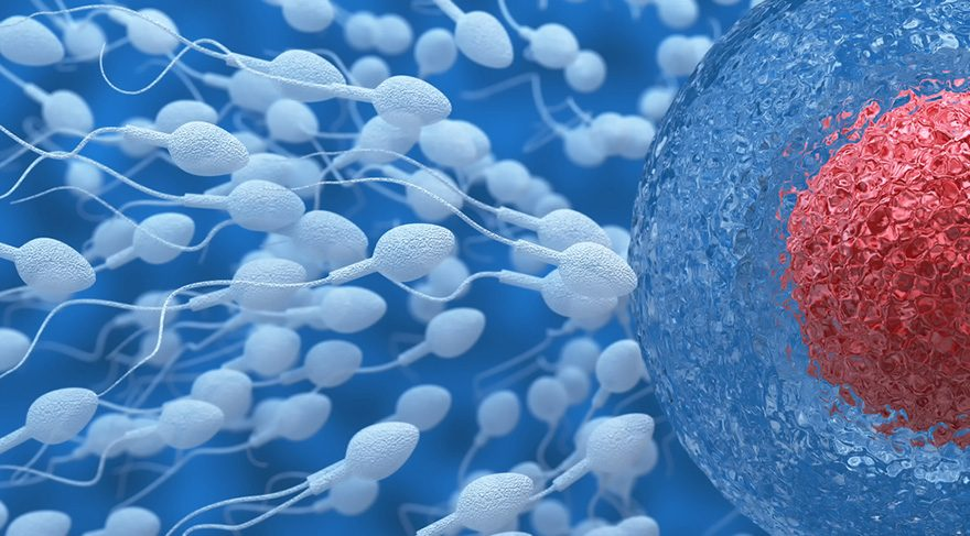 Flu reduces sperm count